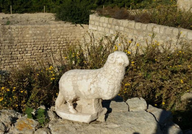 Cesárea: Descubren la talla de un cordero junto a una antigua iglesia del siglo VI 1