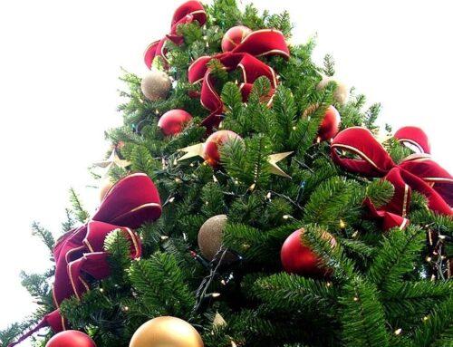 El árbol de Navidad – sus orígenes y sentido cristiano