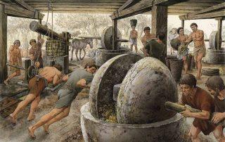 El aceite de oliva - un producto indispensable para la vida del Imperio Romano 1