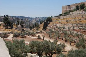 El Templo de Jerusalén 6