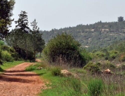 Una aldea llamada Emaús – Tierra Santa