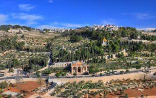 El huerto de los Olivos - Getsemaní en Jerusalén 7