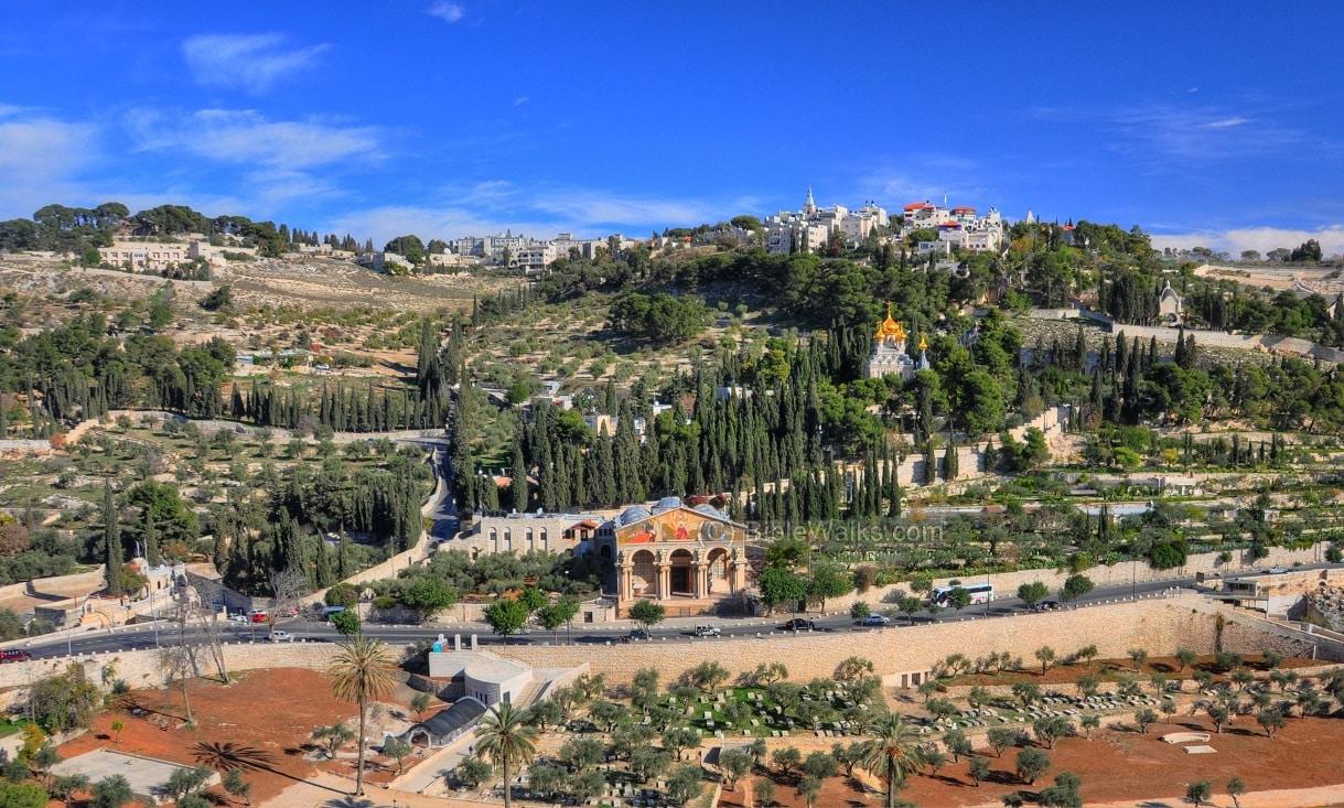 El huerto de los Olivos - Getsemaní en Jerusalén 1
