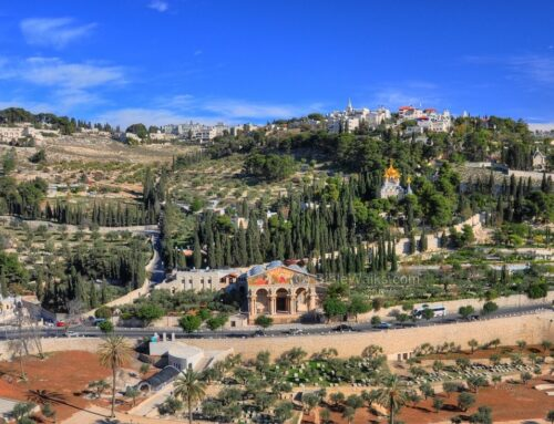Getsemaní: olivos, textos bíblicos y arqueología – Jerusalén