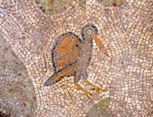 Descubierto un valioso mosaico en Yavne – En el centro de Israel